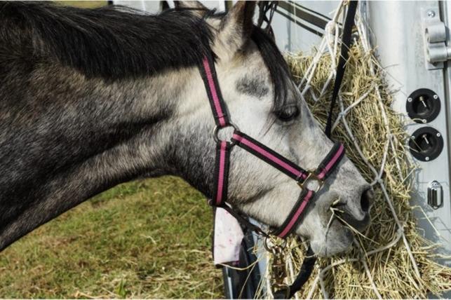 Hay net horse eating