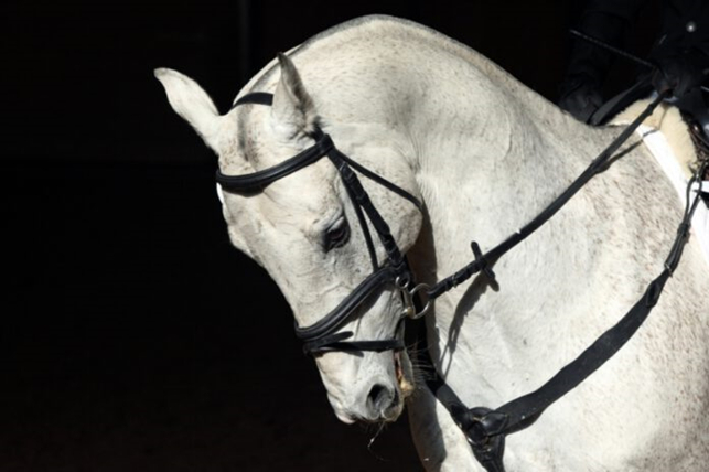 Neck position horse